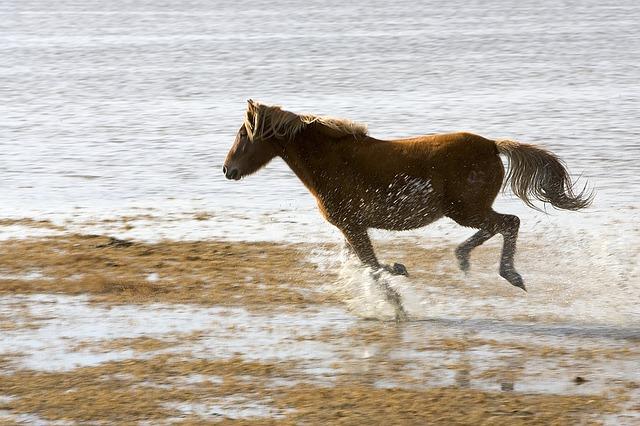 Whild Horse Cumberland Island Georgia