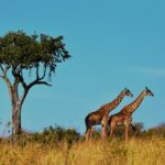 5 Most Breathtaking Sights in Tanzania