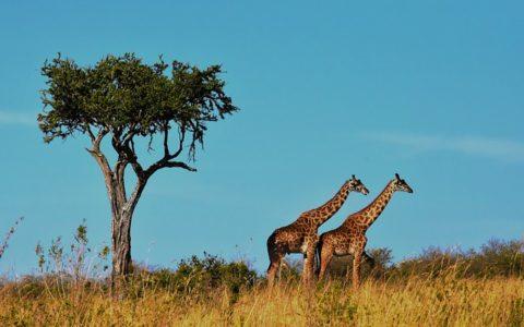 5 Most Breathtaking Sights in Tanzania