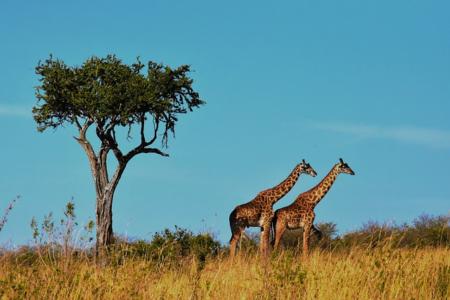 Tanzania Wildlife Safari Parks