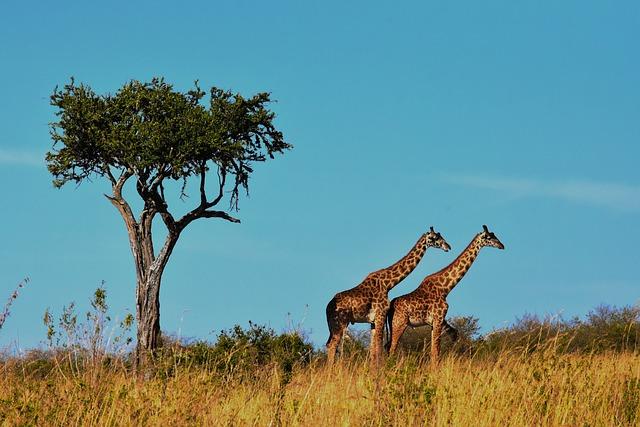 Tanzania Wildlife Safari Parks