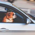Pet Travel Tips, How To Make Moving With A Pet Easier