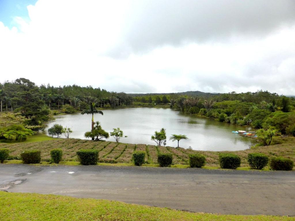 Bohis Cheri Tea Plantation Mauritius