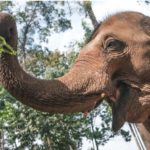 Visiting Responsible Elephant Sanctuary in Thailand