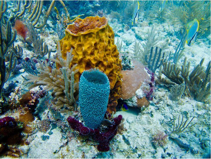 Key West Snorkeling Activities