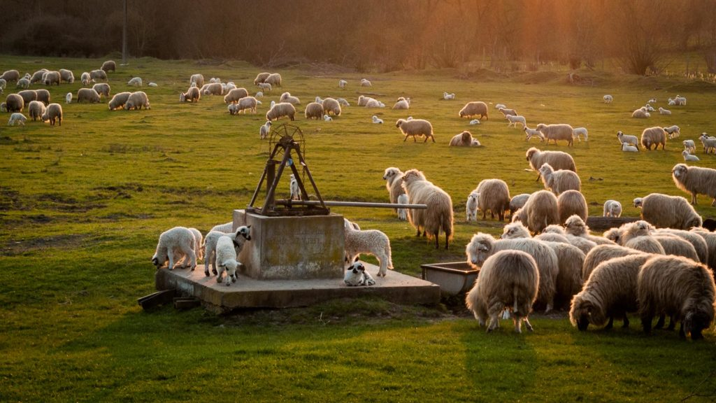 Sheepfold in Romania