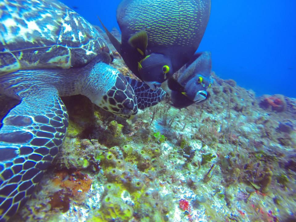 Cozumel Mexico Reef