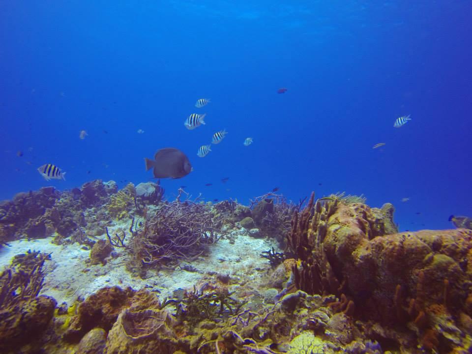 Cozumel Underwater Gardens