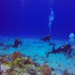 Spectacular Scuba Diving in Cozumel – Everything You Need to Know