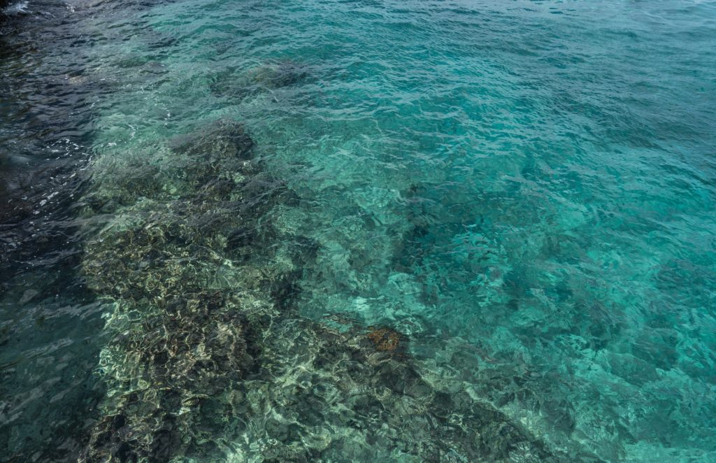 Cozumel Reef Mexico