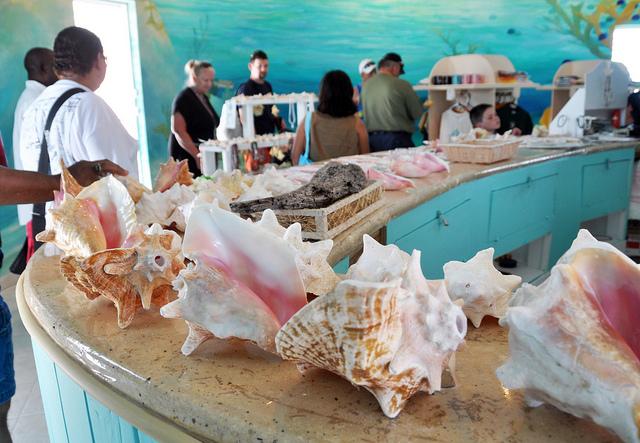conch farm Turks and Caicos
