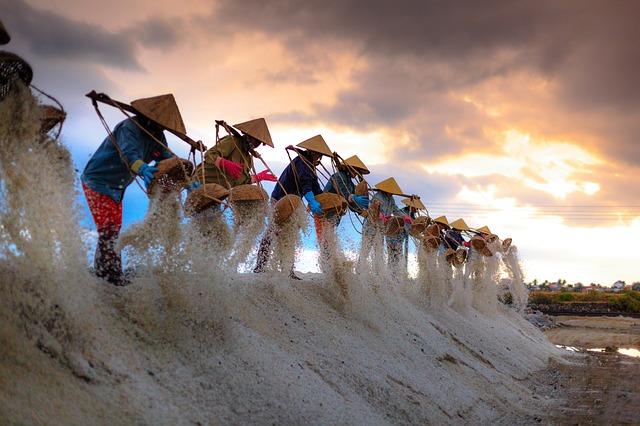 Salt Farmers Vietnam
