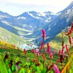 Kashmire Valley of Flowers