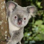 Australia Travel Tips
