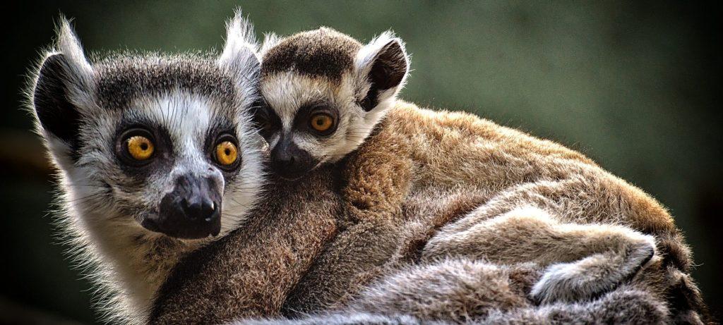 Bioparc Zoo Coasta del Sol Spain