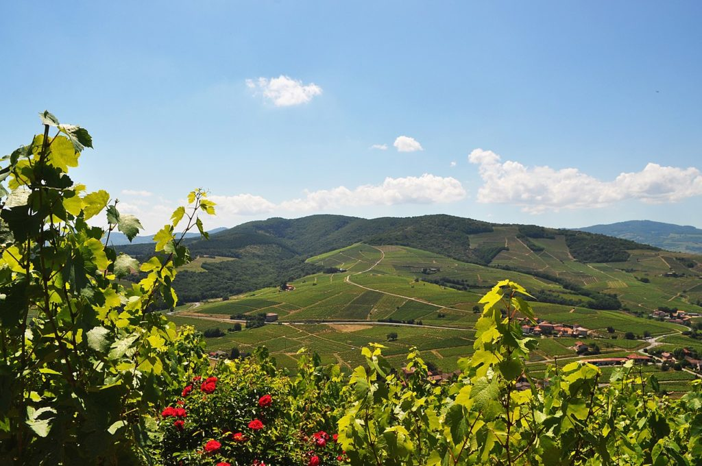 Beaujolis Vineyards