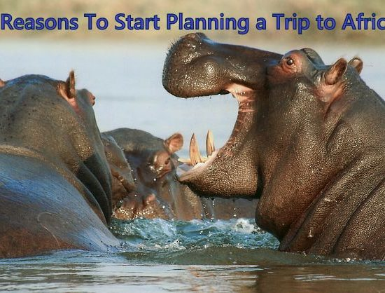 Plan A Trip To Africa