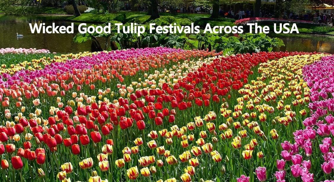 USA Tulip Festivals