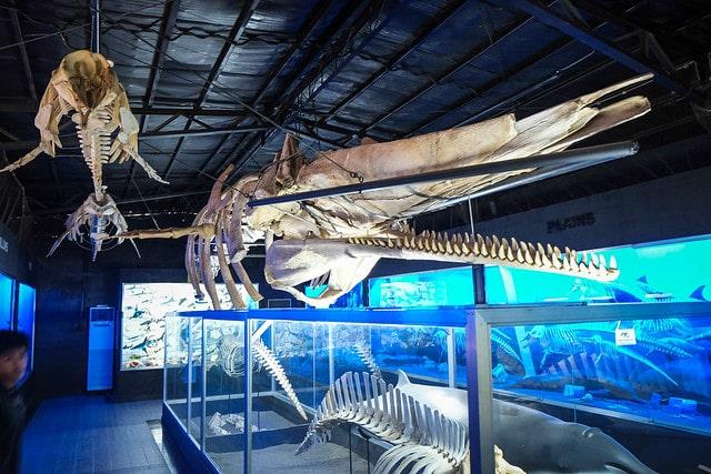 Bone Museum Davao Philippines