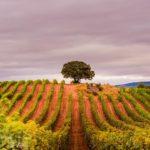 La Rioja Spain Things To Do