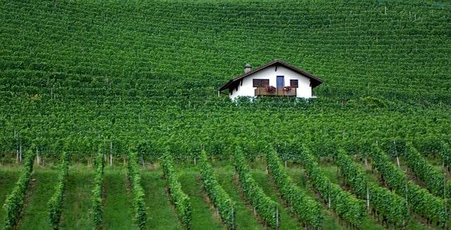 Switzerland Vineyard