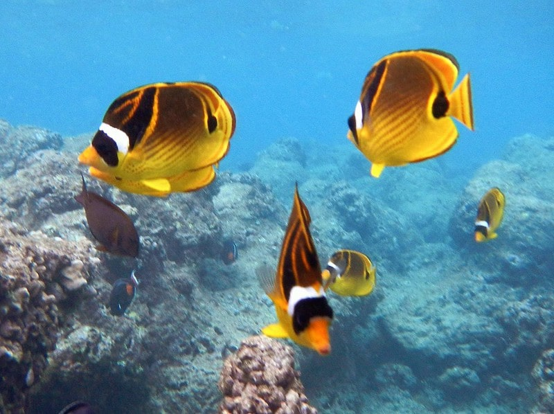 Snorkeling Hanauma Bay, Oahu