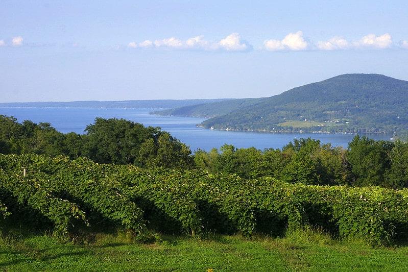 New York Finger Lakes Vineyards