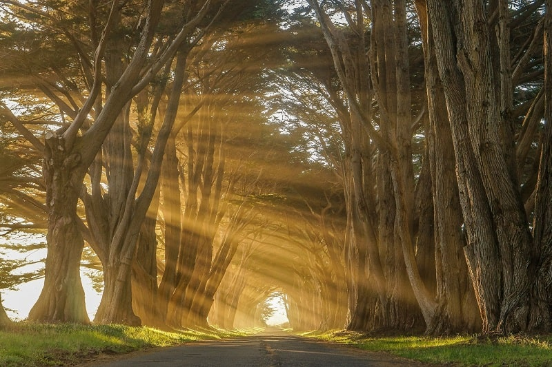 Cypress Tree Tunnel California