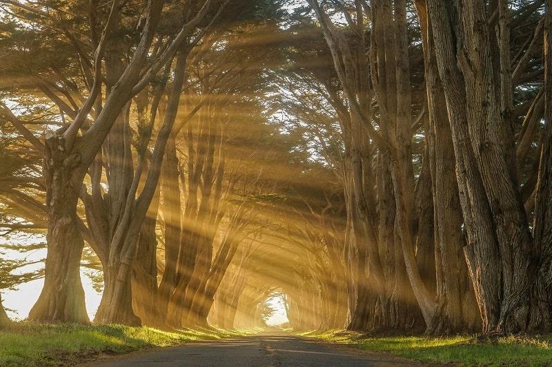 Cypress Tree Tunnel California