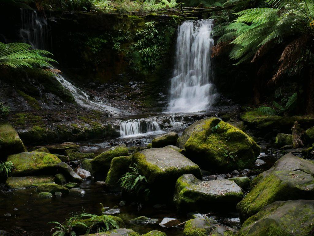 Mount Field National Park Tasmania