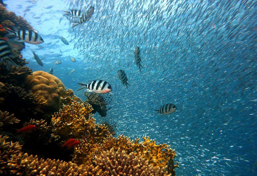 Bali Reef