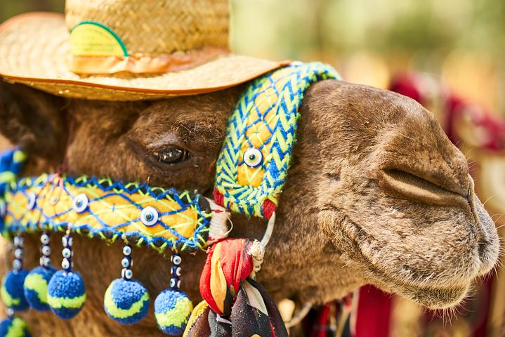 Camel Riding Dubai