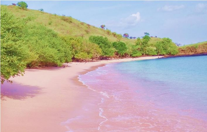 Pink Sand Beach Indonesia