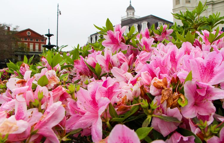New Orleans Spring Festivals