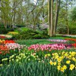 Holland Tulip Gardens