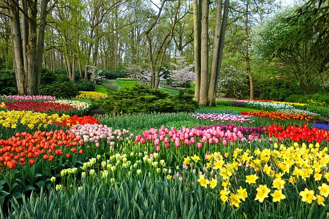 Holland Tulip Gardens