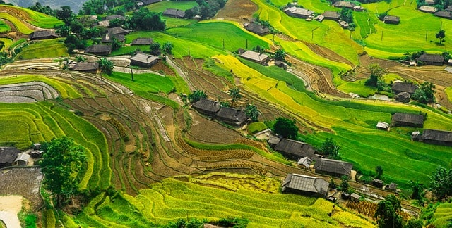 Bali Rice Pady
