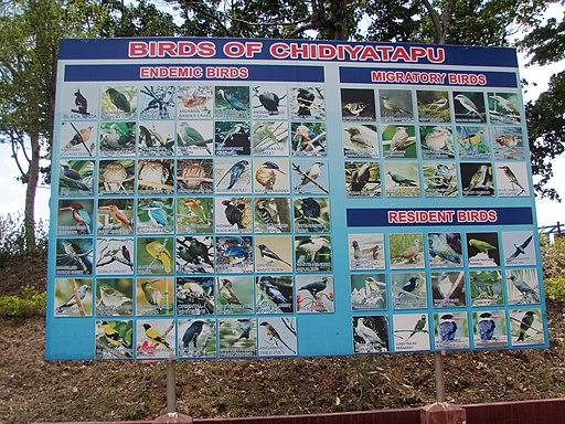 Birds of Chidiya Tapu Andaman Islands