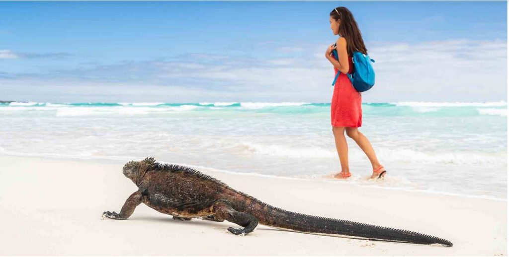 Galapagos Islands Travel Tips
