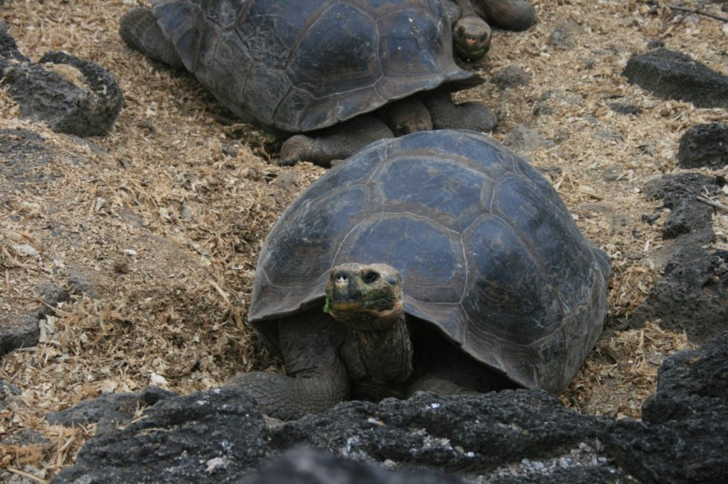 Galapagos Islands Turtles