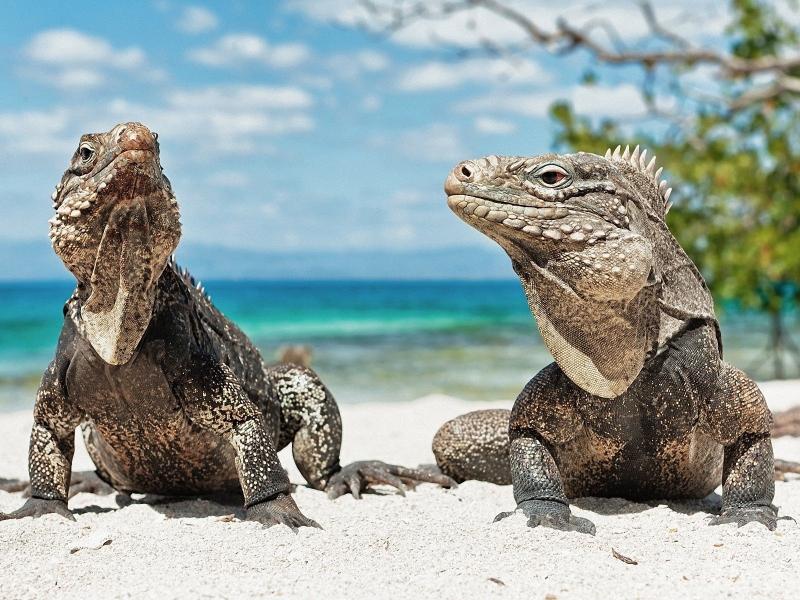 Galapagos Islands Beach