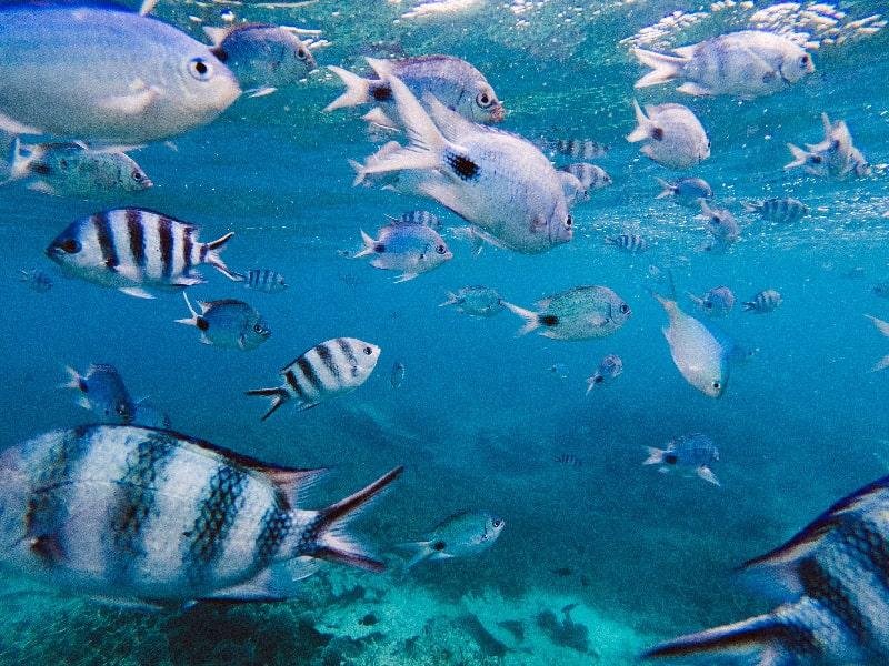 Blue Hole Marine Park Mauritius