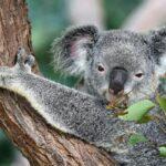 Top Sites in Australia