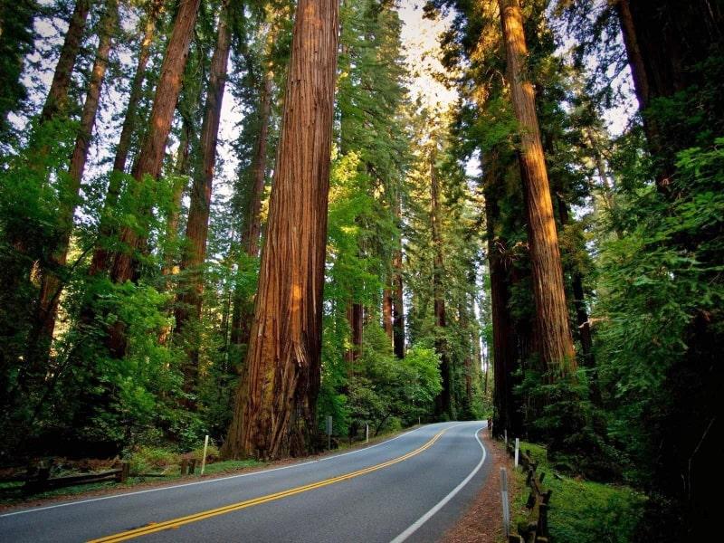 Redwoods Park California