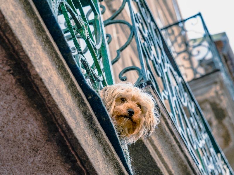 Pet-Friendly Travel Destinations