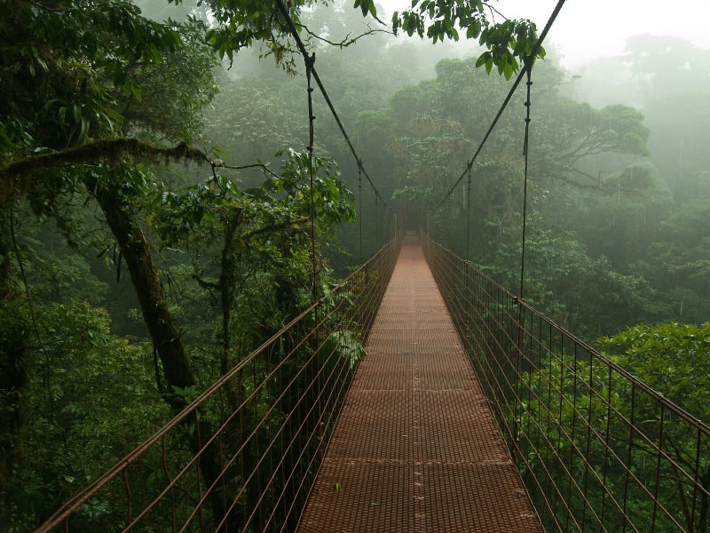 Costa Rica Rainforest Tour