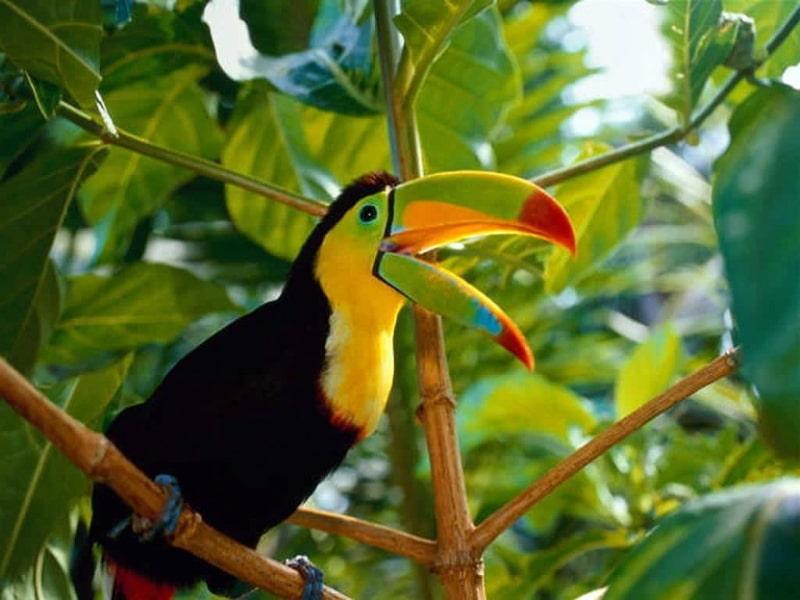 Costa Rica Wildlife