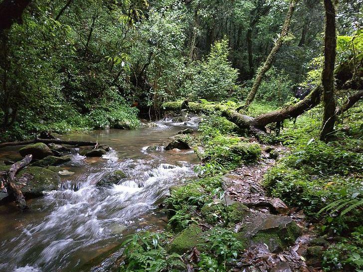 Mawphlang Sacred Forest India