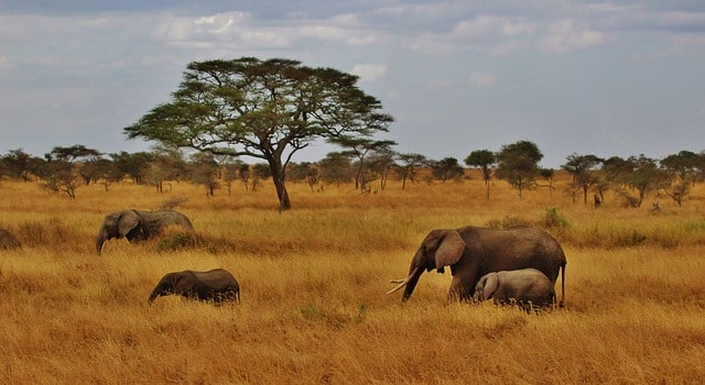 Top Tansania Safari Camps
