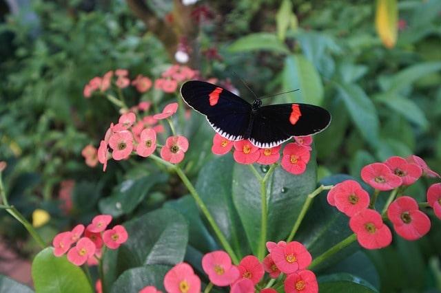 Key West Butterfly Sanctuary